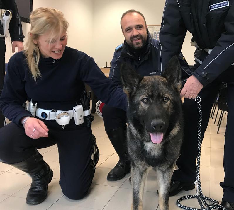 Il nuovo agente speciale si chiama Ziko, è un pastore tedesco grigione di dieci mesi, maschio, che presto diventerà operativo in servizio antidroga ed è già stato inquadrato nell'organico della Polizia Municipale.